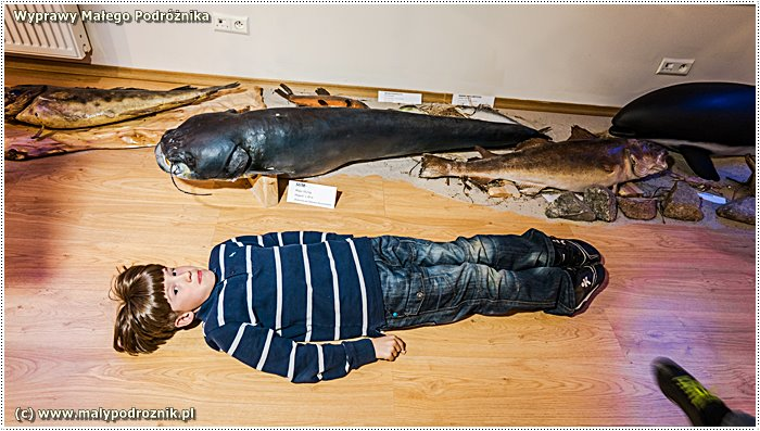 Muzeum Rybołówstwa Morskiego w Niechorzu