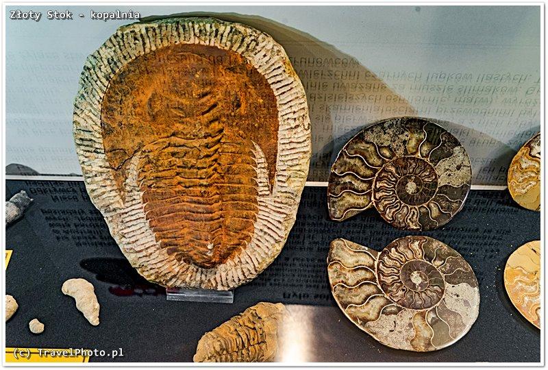Złoty Stok, Kopalnia Złota - wystawa minerałów, są również skamieniałości