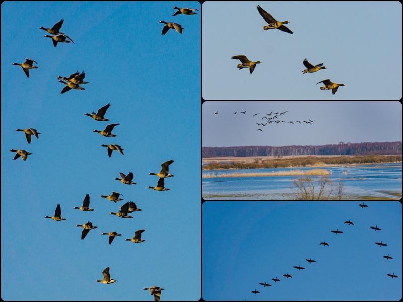 Coraz więcej ptaków wokół nas