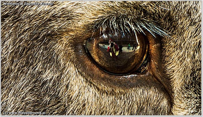 Ania przegląda się w oku łosia.