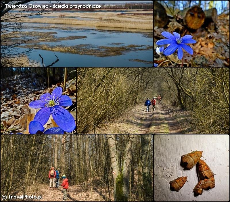 Twierdza Osowiec - przyroda na ścieżce przyrodniczej