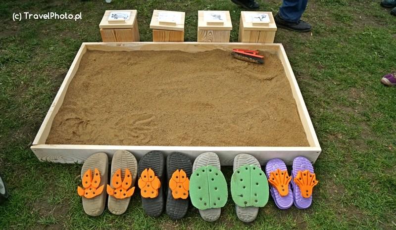 Powiat Hajnowski uczył jak odczytywać tropy zwierząt na piasku.