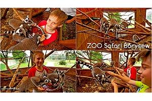 Karmimy lemury – ZOO Safari Borysew! (film)