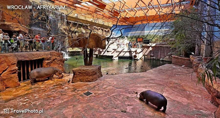 Wrocław, AFRYKARIUM - w gościnie u hipopotamów