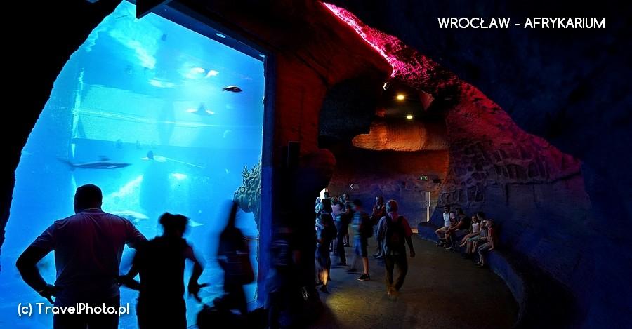 Wrocław, AFRYKARIUM - akwaria i przejścia między krainami Afryki robią wielkie wrażenie