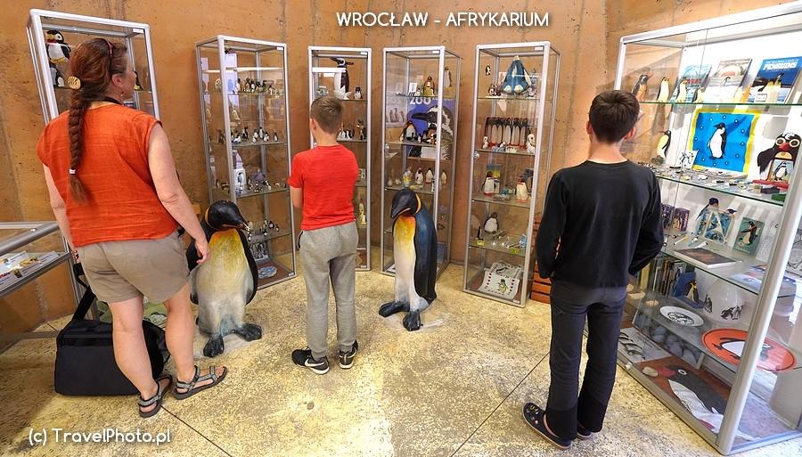 Wrocław, AFRYKARIUM - jedna z wystaw czasowych - kolekcja pingwinów!