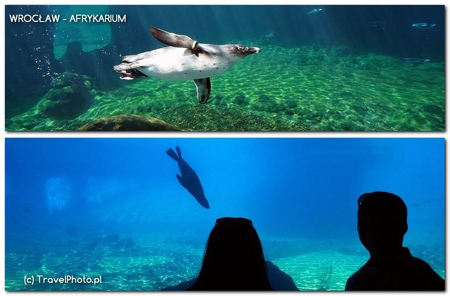 Wrocław, AFRYKARIUM - pingwiny i kotiki