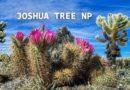 JOSHUA TREE NP – USA, Route 66 & Wild West