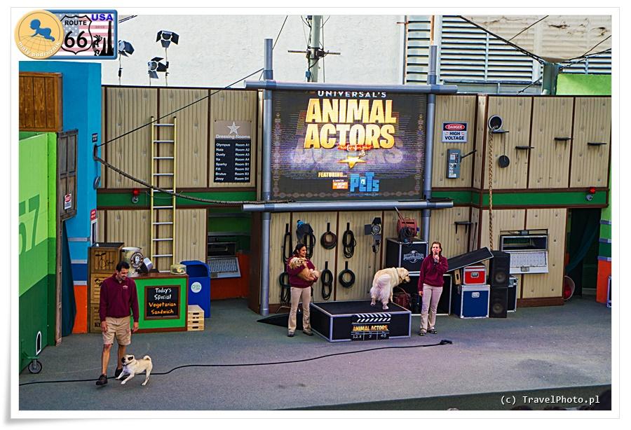 LA - Universal Studios, zwierzęta aktorami