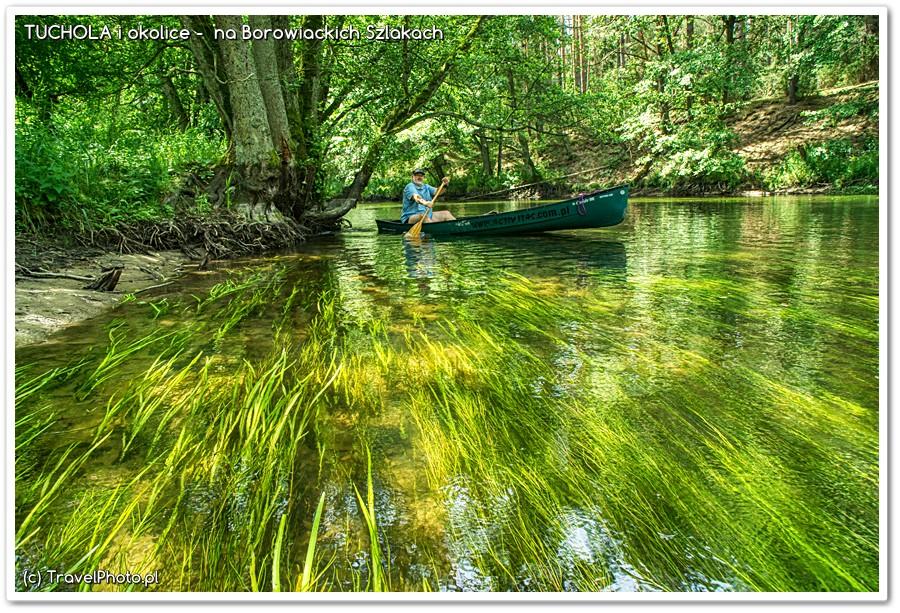 Bory Tucholskie - spływ Brdą
