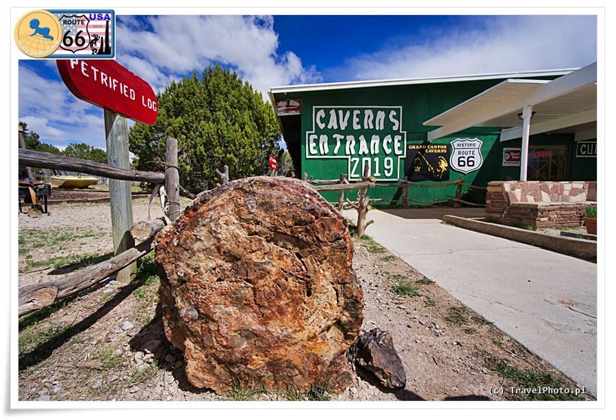 Grand Canyon Caverns - przed wejściem do pieczar możecie zobaczyć skamieniałe drzewo.