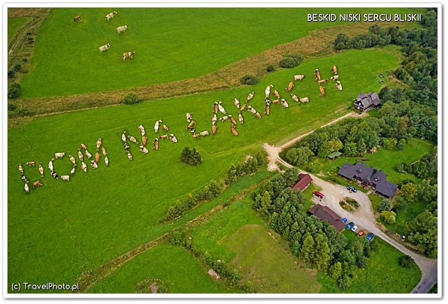 Mistrzostwo latania dronem i wyrozumiałość krów!