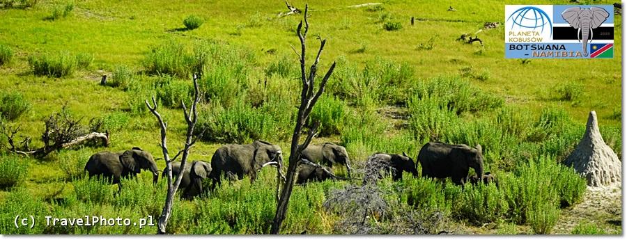 BOTSWANA - lot nad Okavango