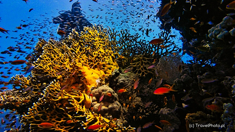 Nurkowanie w Sharm El Sheikh - TEMPLE