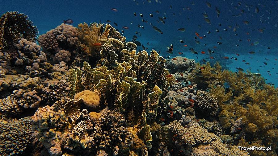 Gordon Reef