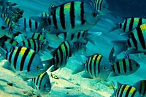 EGIPT 2021 – nurkowanie w Sharm El Sheikh – strona 6